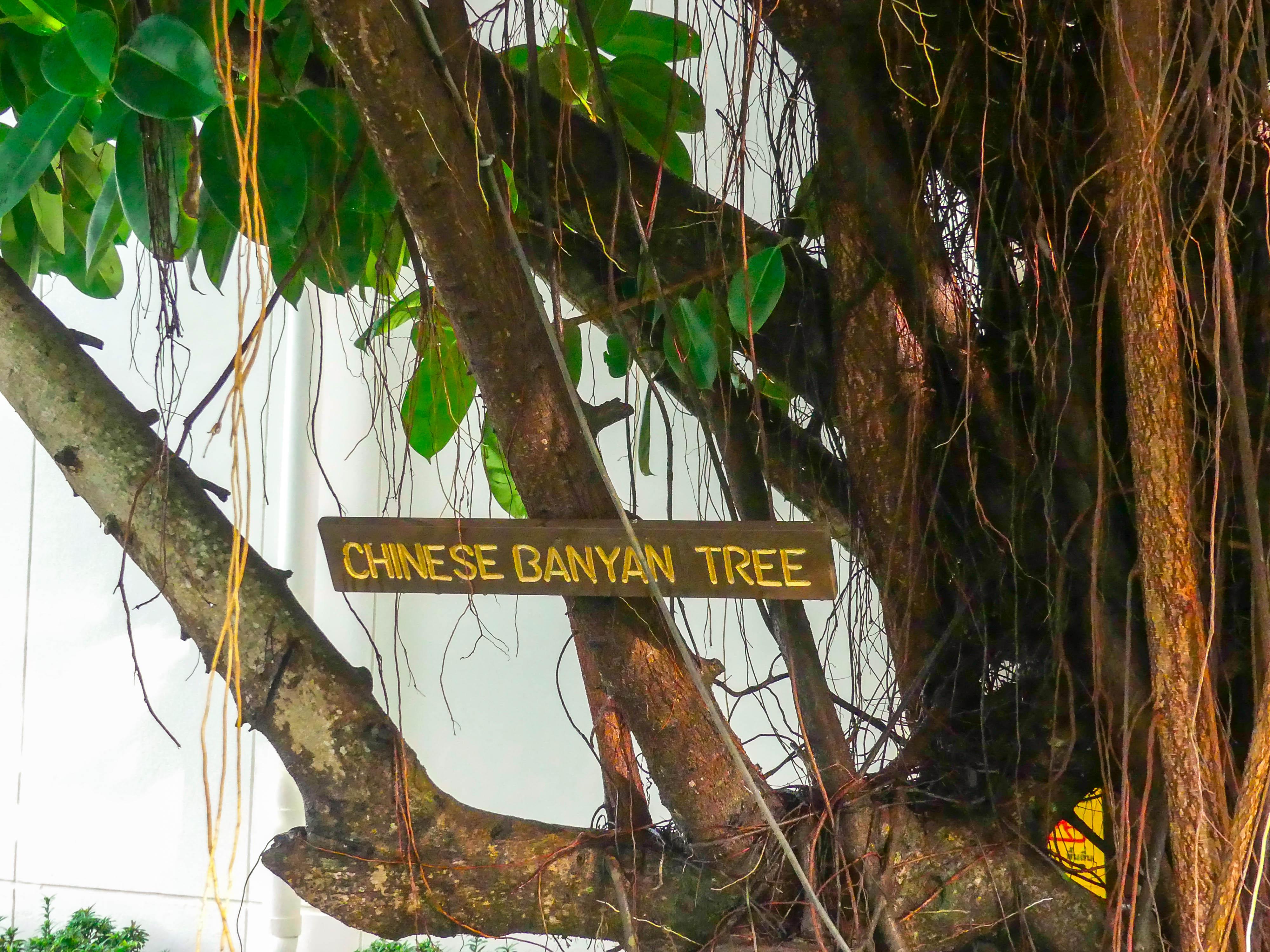Koh Samui Ibis Bophut Gartenanlage 2