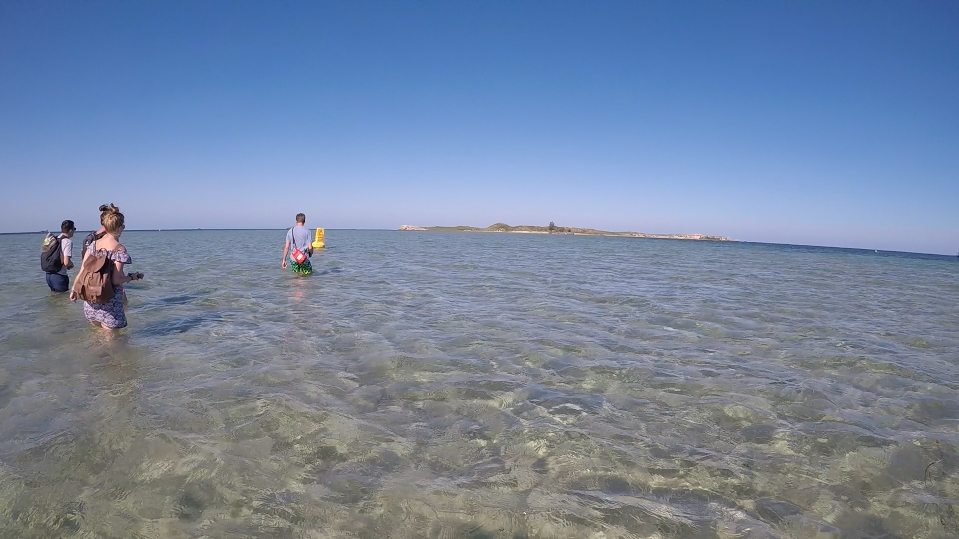 Sandbank Pinguin Island