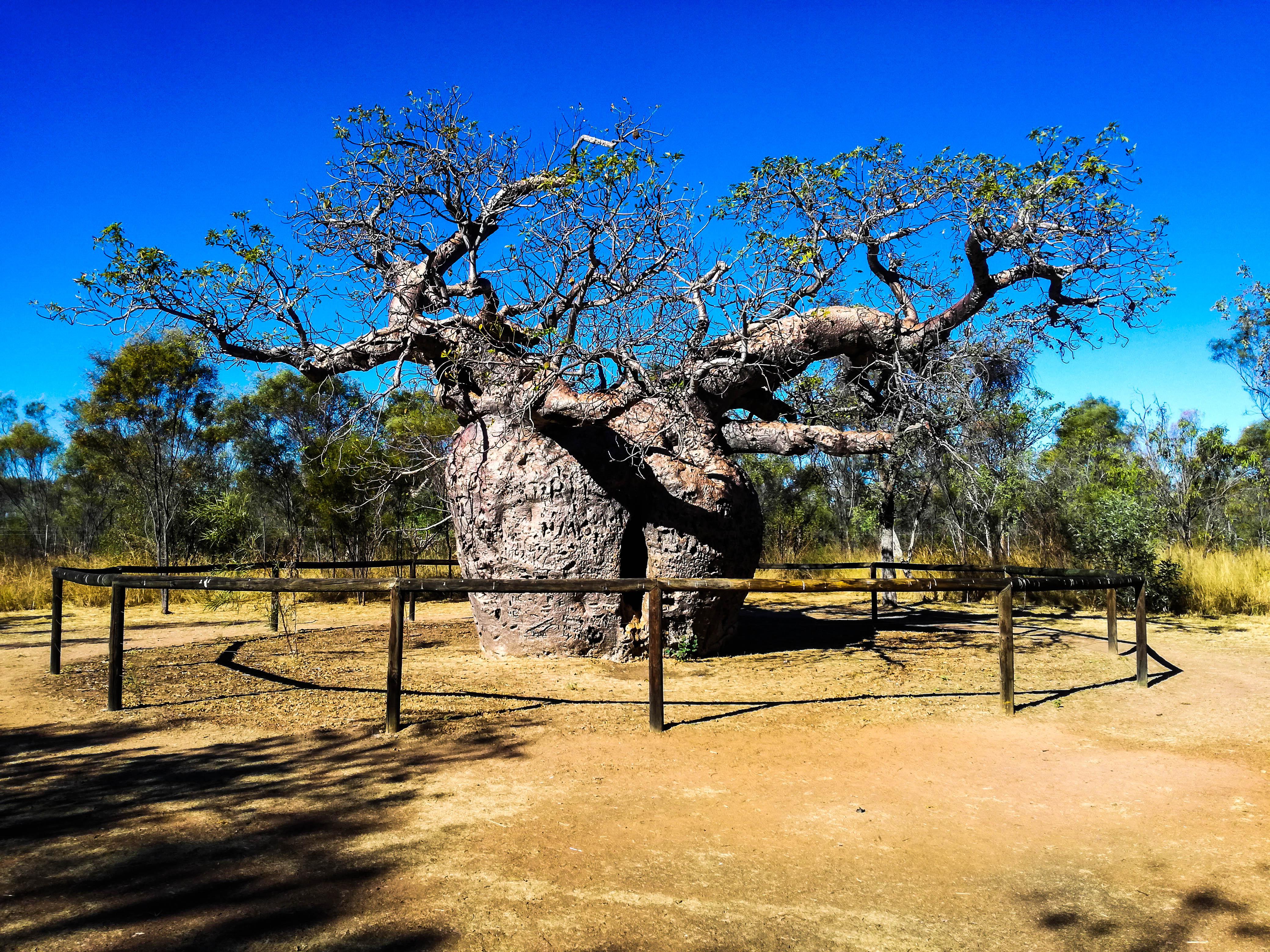BOAB Baum