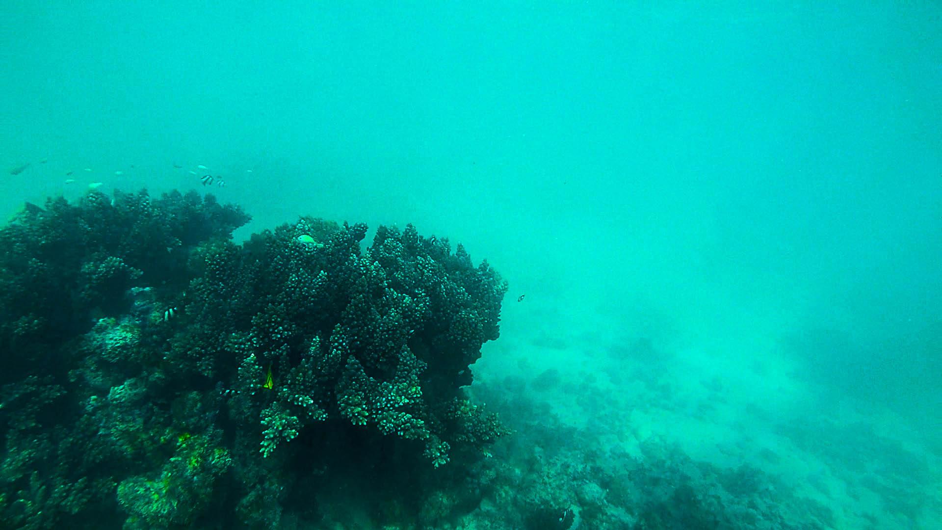 Sicht unter Wasser
