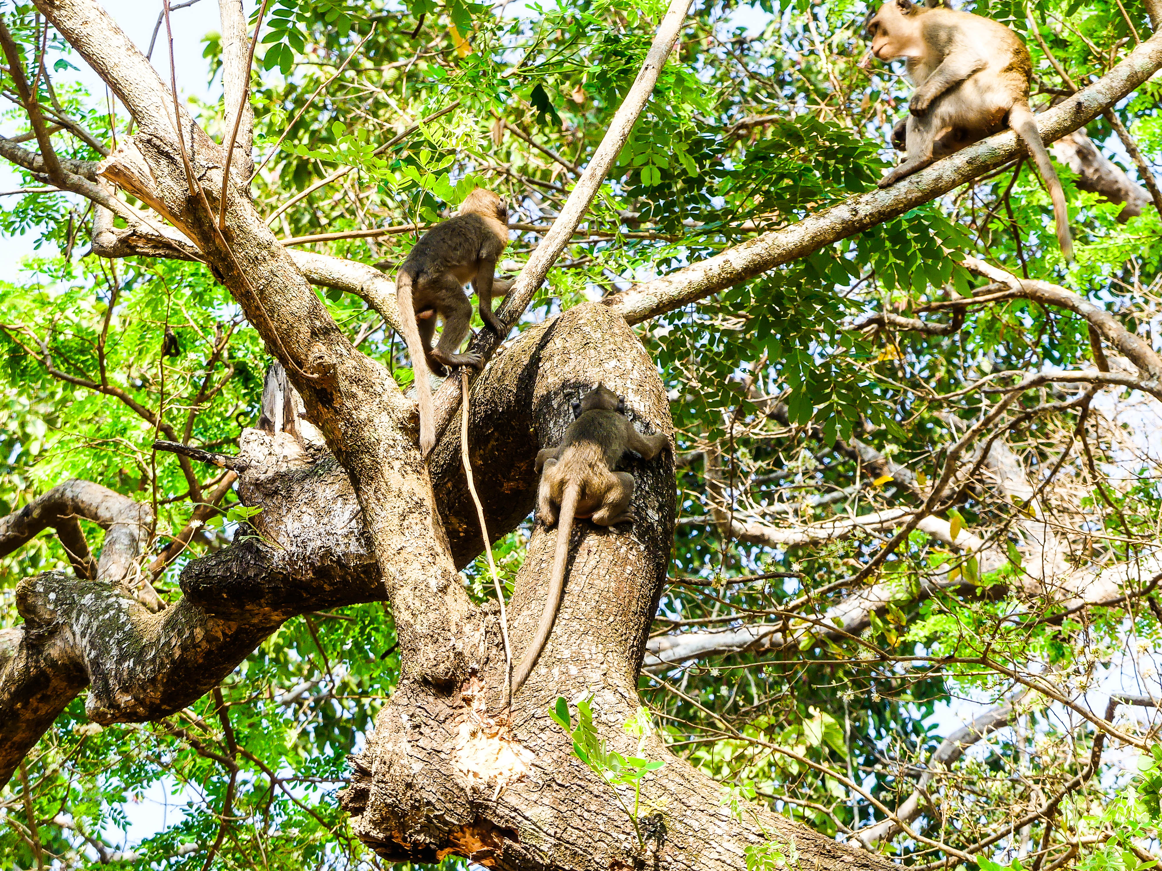 Affen auf dem Baum